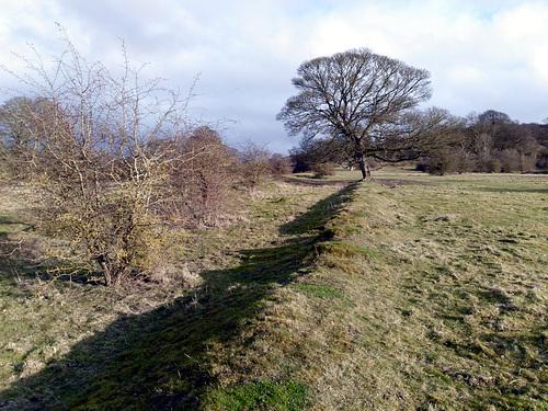 Cross Dyke