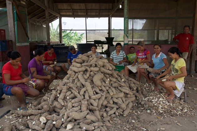 Members of the São Raimundo do Fe em Deus cooperative in the rural municipality of Belterra in Brazil's Amazon rainforest peel manioc, to make flour. The associations of small farmers help them defend themselves from the negative effects of the expansion of soy in this region on the banks of the Tapajós River. Credit: Fabiana Frayssinet/IPS