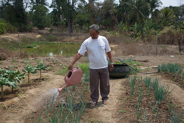 José de Souza waters the garden on his nine-hectare farm in the municipality of Belterra in the northern Brazilian Amazon rainforest state of Pará, where his vegetables grow sparsely due to the effects of the spread of soy monoculture, which has hurt family farmers in the area, who produce 70 percent of the food consumed by the local population. Credit: Fabiana Frayssinet/IPS