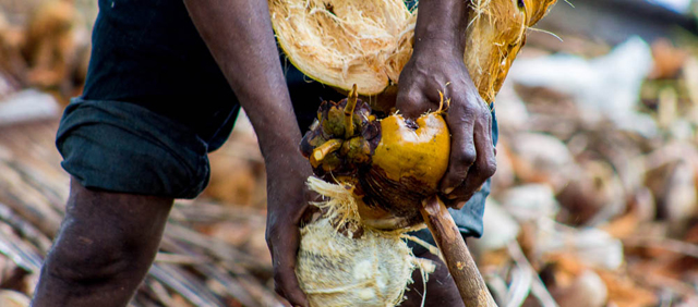 Mozambique: Investing in Environment Pays off for the Poorest. Communities look to protect ecosystems for livelihoods, following a disease that devastated their coconut plantations. Credit: UNEP