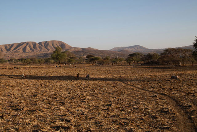 Drought associated with the El Niño phenomenon has severely affected Arsi, Ethiopia. Photo credit: OCHA/Charlotte Cans