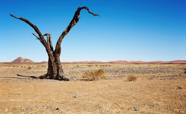 Two billion hectares of land are badly degraded as a result of desertification. Credit: Bigstock/IPS