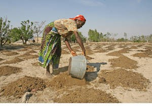 Race against time in drought-ravaged Southern Africa to ensure 23 million people receive farming support | Photo: FAO