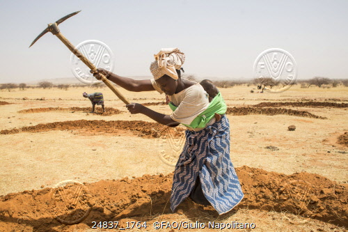 Djibo, Burkina Faso - Planting seeds and seedlings. Credit: ©FAO/Giulio Napolitano