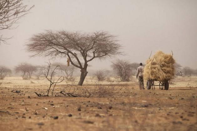 A farmer transporting hay to Tera weekly market, Tera, Bajirga, Niger. Credit: FAO