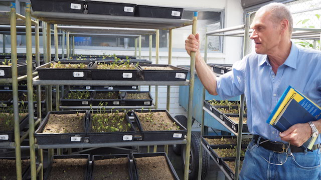Seed bank head Daniel Debouck at CIAT, Colombia. Credit: Ida Karlsson/IPS