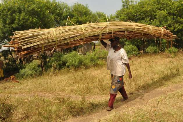 A woman transporting a stack of reeds in rural Kenya. Women's unpaid care and domestic work is yet to be recognized as labour in many parts of the developing world. Photo courtesy of UNDP Kenya.