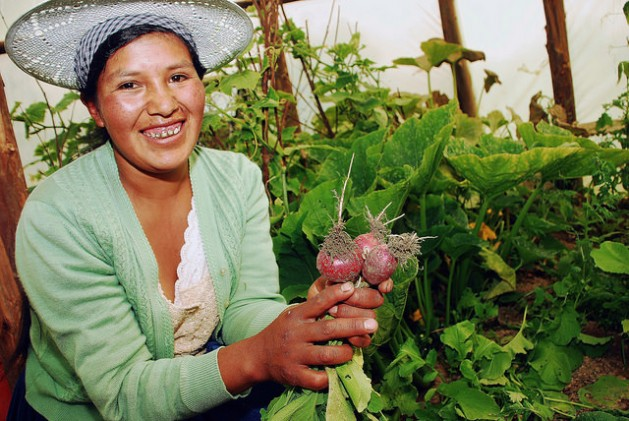 The young Jhaneth Rojas shows radishes planted in a greenhouse-type family garden or solar tent in the village of Phuyuwasi in a highland valley in the central Bolivian department of Cochabamba. Credit: Franz Chávez/IPS