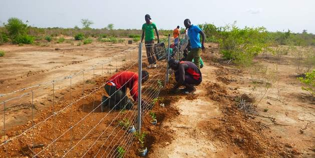 Burkina Faso: 20 000 trees are planted to create living hedges. Credit: UNCCD