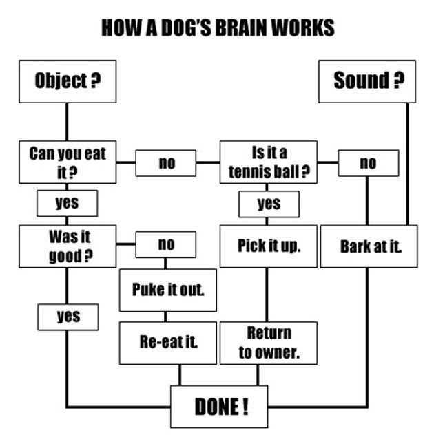 How a dog's brain works.