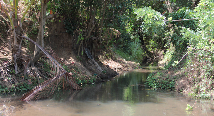 """Bramble's Body Was Discovered On The Left Bank Of This Stream In """"Quata"""", Brighton. (Photo: Iwn)"""