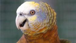 Vg Parrot
