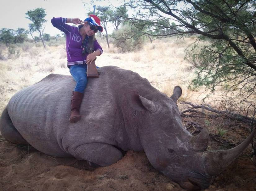 Image result for dead white rhino
