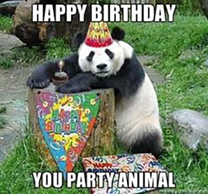 joke4fun memes party animal