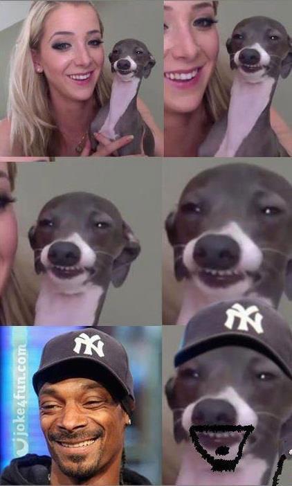 Dog Smiling Meme : smiling, Joke4Fun, Memes:, Smile