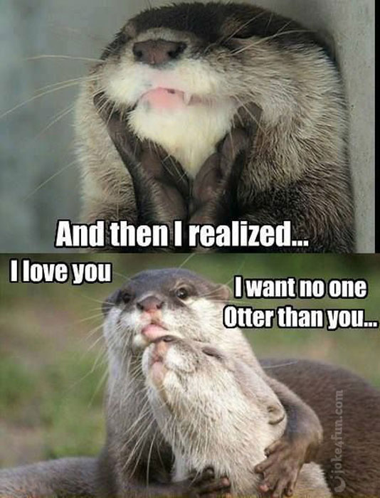 Funny Otter Pictures : funny, otter, pictures, Joke4Fun, Memes:, Significant, Otter