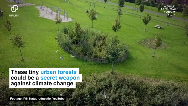 Hong kong children help green group create city's first 'tiny forest' to beat the heat. These Tiny Urban Forests Could Be A Secret Weapon Against Climate Change Forum Economique Mondial