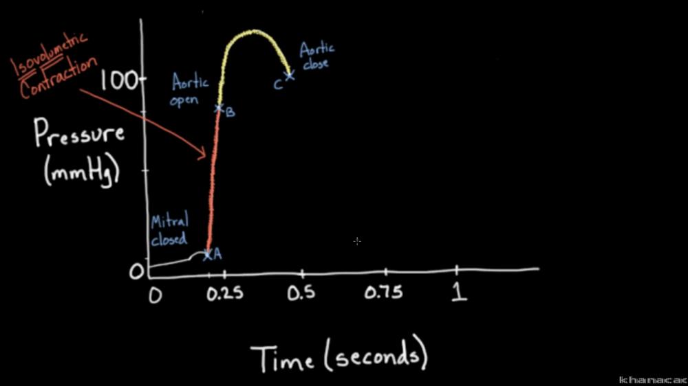 medium resolution of isovolumetric pv line diagram