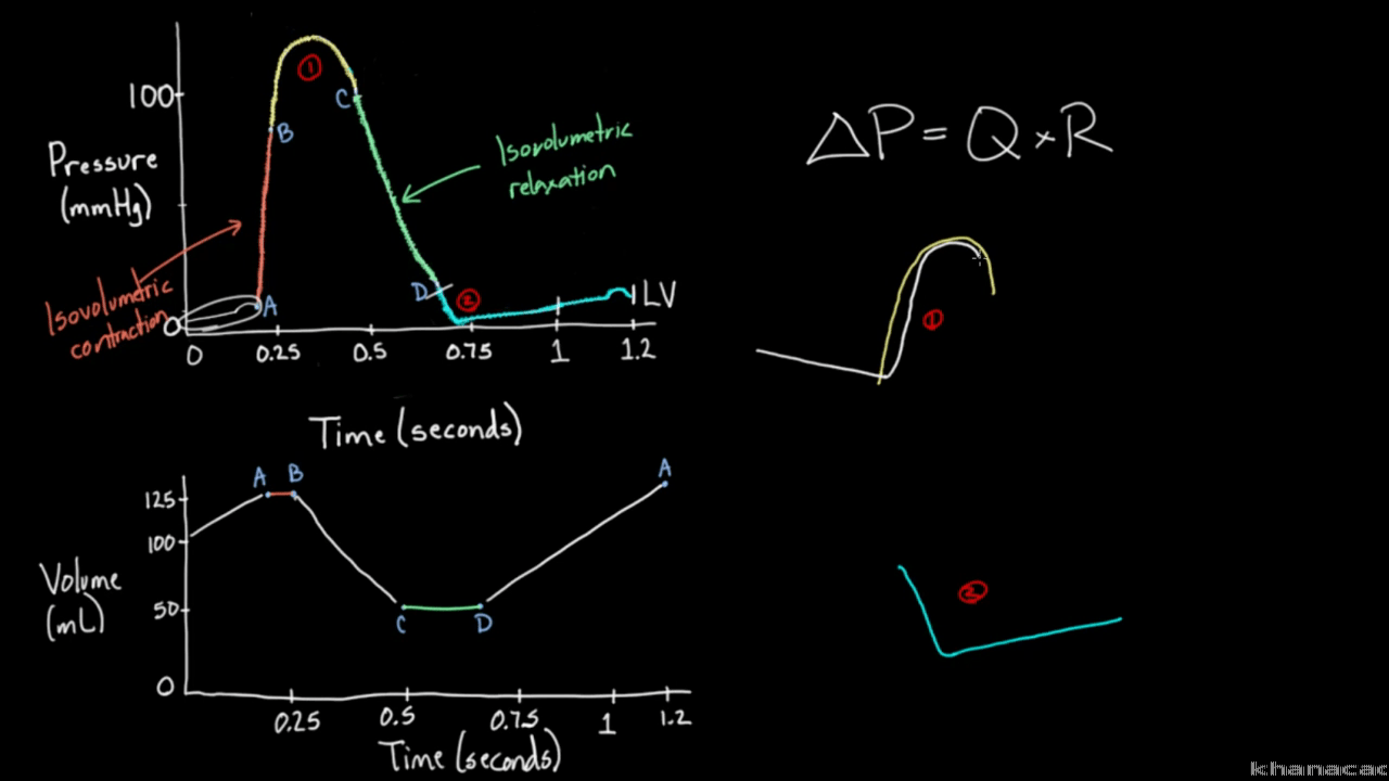 hight resolution of isovolumetric pv line diagram
