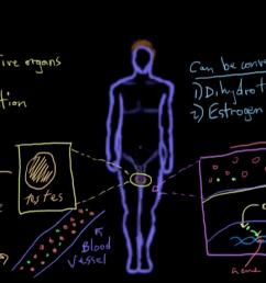 reproductive diagram quiz [ 1280 x 720 Pixel ]