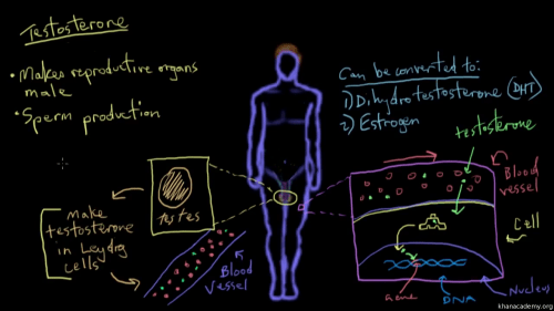 small resolution of reproductive diagram quiz