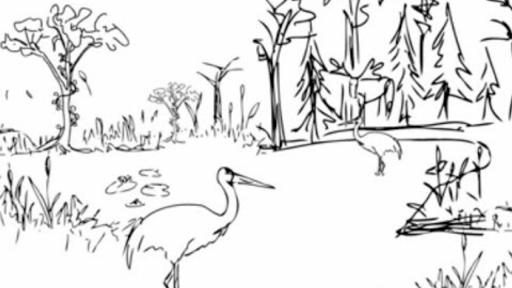 Biological Diversity And Conservation Chapter 5 Worksheet