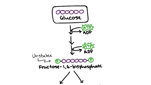 stages of glycolysis and fermentation diagram nissan x trail t30 stereo wiring cellular respiration biology article khan academy
