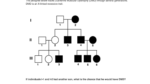 31 E Bio Worksheet Pedigree Analysis In Genetics