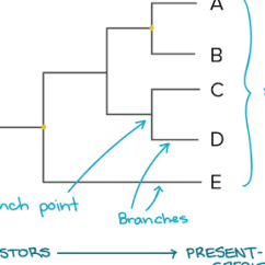 Morphology Tree Diagram Typical Wiring For House Phylogenetic Trees Evolutionary Article Khan Academy