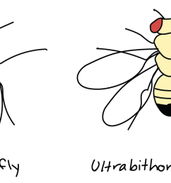 image credit modified from drosophila melanogaster by madboy74 cc0 public domain based on similar image by p a otto 2 2 2start superscript 2  [ 1500 x 642 Pixel ]