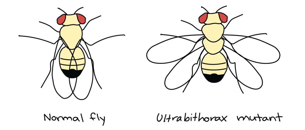 medium resolution of image credit modified from drosophila melanogaster by madboy74 cc0 public domain based on similar image by p a otto 2 2 2start superscript 2