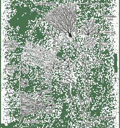 nervou system diagram for 4th grade [ 1771 x 1267 Pixel ]