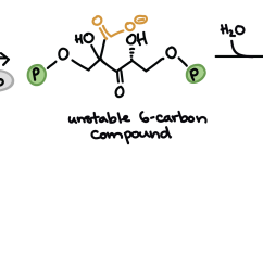 diagram showing the molecular structures of rubp and carbon dioxide the unstable six carbon [ 3425 x 1036 Pixel ]