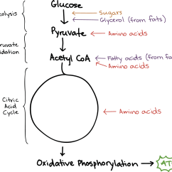 Photosynthesis And Cellular Respiration Cycle Diagram Coleman Heat Pump Wiring Schematic Connections Between Other Pathways Article Simplified Image Of Showing The Different Stages At Which Various Types