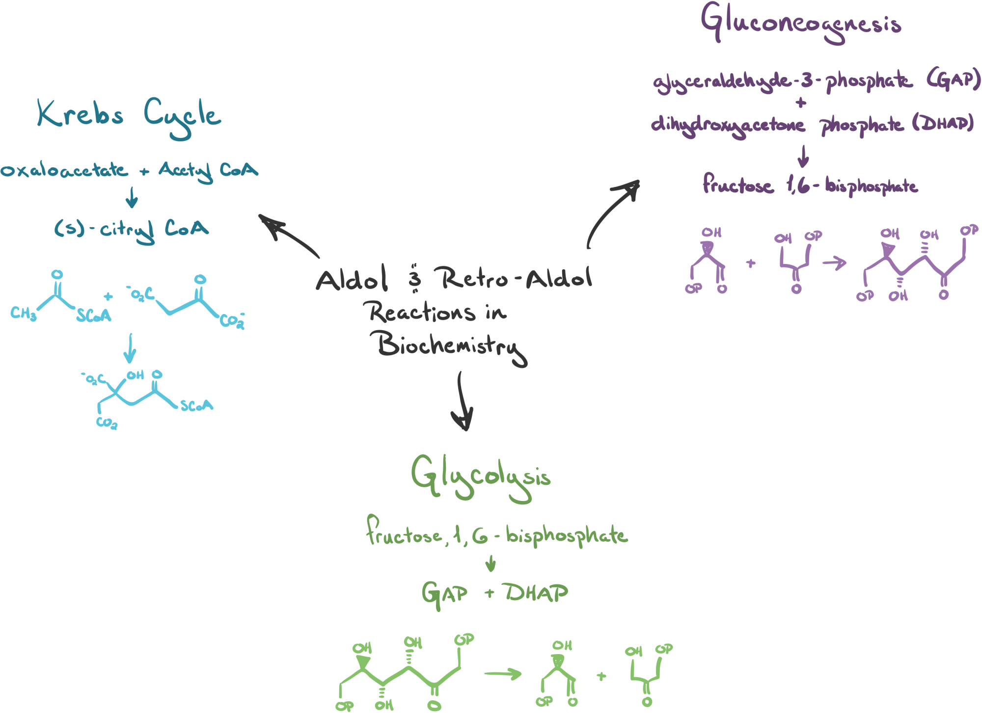 hight resolution of diagram showing the three metabolic processes that use aldol and retro aldol reactions the