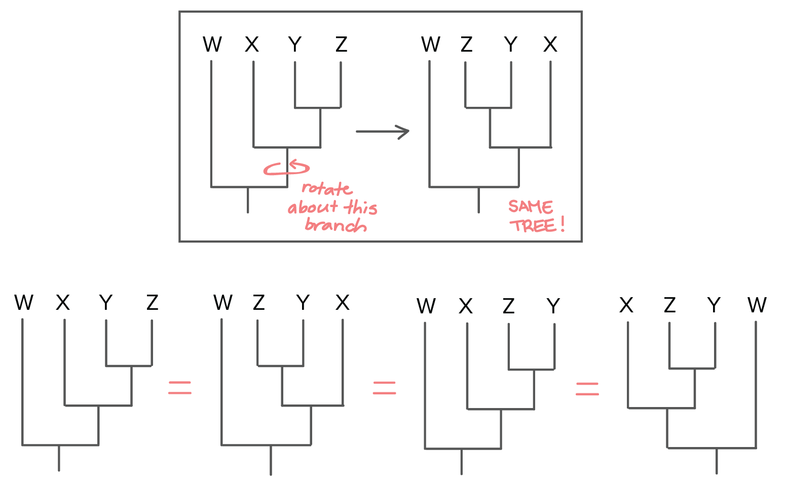 morphology tree diagram evinrude 115 ficht wiring phylogenetic trees evolutionary article khan academy some tips for reading