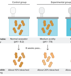 experimental setup to test effects of water acidity on coral bleaching control group coral [ 2342 x 1617 Pixel ]