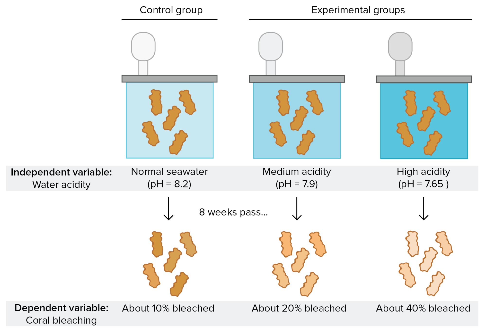 hight resolution of experimental setup to test effects of water acidity on coral bleaching control group coral