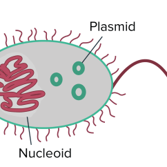 Microbiology Prokaryotic Cell Diagram Labeled Ixl Tastic Wiring Prokaryote Structure Article Khan Academy Prokaryotes Generally Have A Single Circular Chromosome That Occupies Region Of The Cytoplasm Called