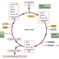 Diagram With Inputs And Outputs Of Photosynthesis Process Waterway Spa Pump Wiring The Calvin Cycle Article Khan Academy 1 Fixation For Every Three Turns Atoms