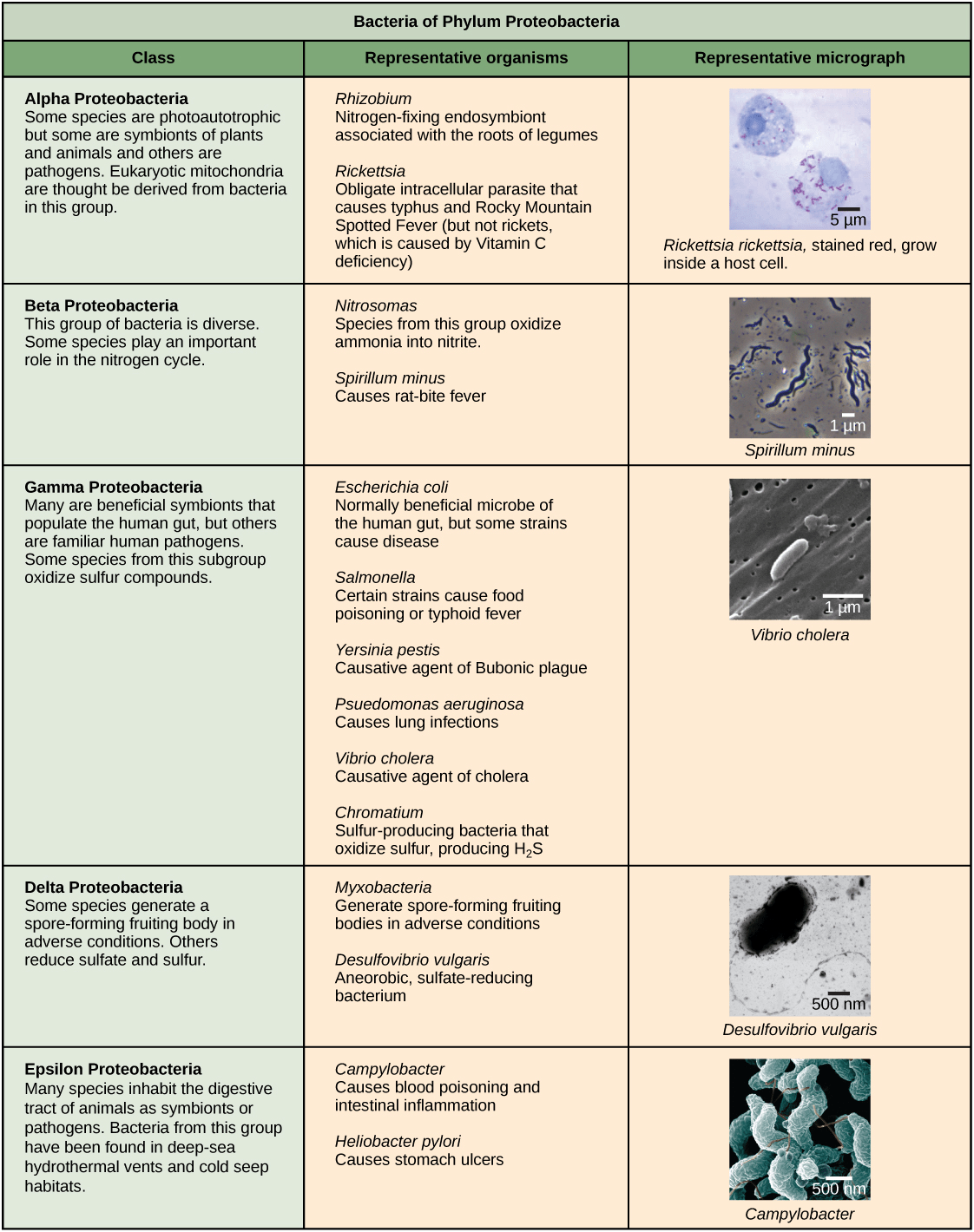 Ways To Classify Bacteria What Are The Ways To Identify