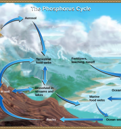 this illustration shows the phosphorus cycle phosphorus enters the atmosphere from volcanic aerosols as [ 1117 x 778 Pixel ]