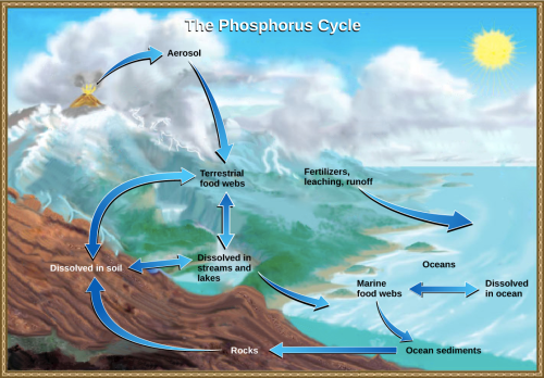 small resolution of this illustration shows the phosphorus cycle phosphorus enters the atmosphere from volcanic aerosols as