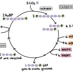 Diagram A Sentence Easy Steps Goodman Heat Pump Thermostat Wiring The Calvin Cycle Article Photosynthesis Khan Academy Of Illustrating How Fixation Three Carbon Dioxide Molecules Allows