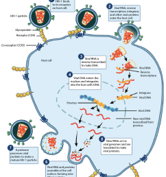 image modified from prevention and treatment of viral infections figure 4 by openstax college biology originally from niaid nih cc by 4 0  [ 1235 x 1396 Pixel ]