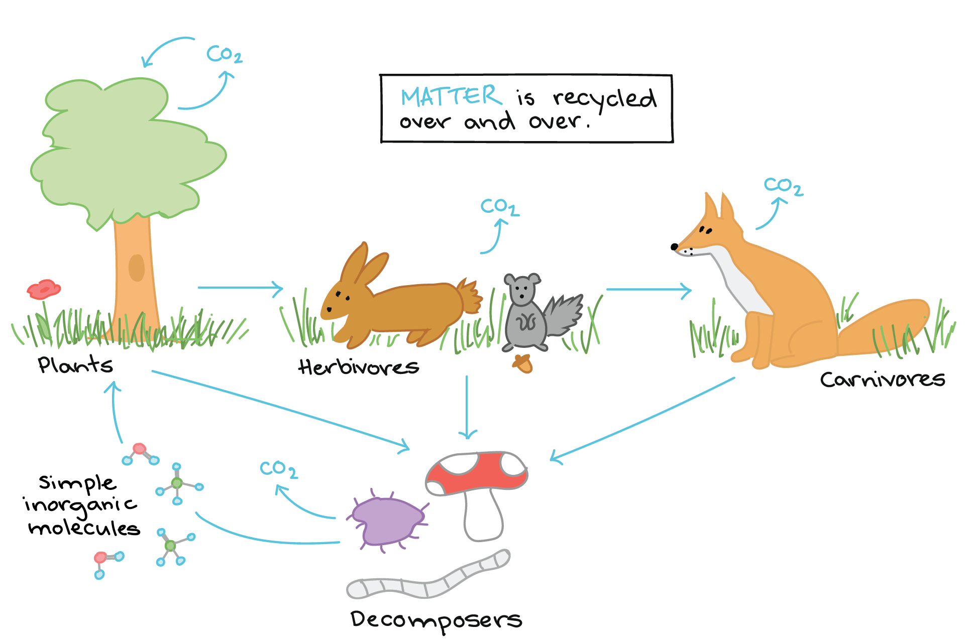 Example Of A Stable Ecosystem What Is The Difference
