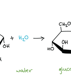 hydrolysis of maltose in which a molecule of maltose combines with a molecule of water [ 2165 x 671 Pixel ]