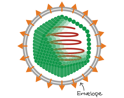 small resolution of diagram of enveloped icosahedral virus