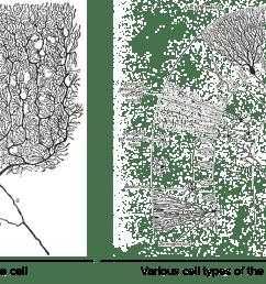 nervou system diagram for 4th grade [ 2550 x 1404 Pixel ]