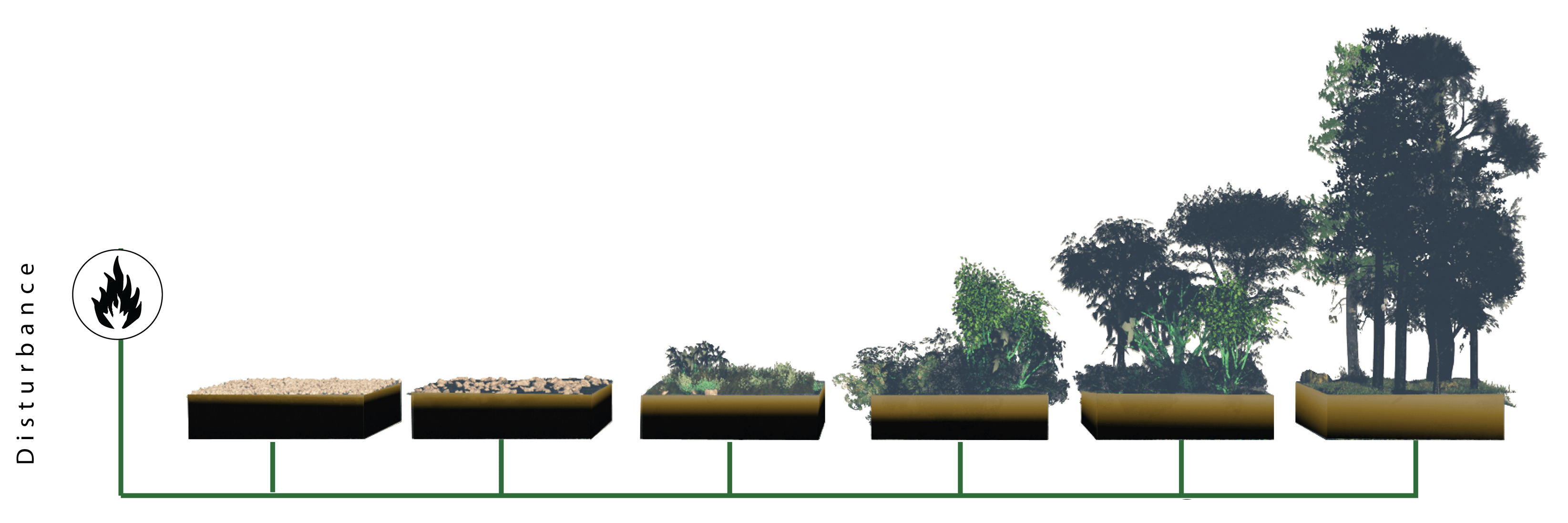 Ecological Succession On Bare Rock Ecological Succession